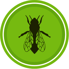 icon fly pest control