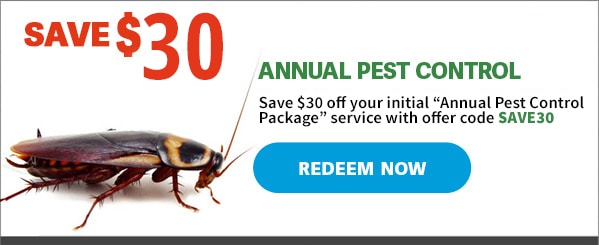 50-dollar-off-annual-pest-control-services-cockroach-2019